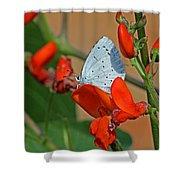 Small Blue Butterfly Shower Curtain