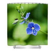 Small Fly On A Small Wildflower - Featured 3 Shower Curtain