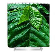 Small Leaves With Water Drops Shower Curtain