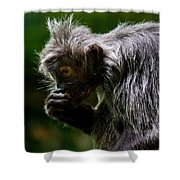 Small Monkey Eating Shower Curtain