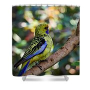 Small Parrot Shower Curtain