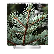 Small Pine Shower Curtain