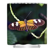 Small Postman Butterfly Shower Curtain
