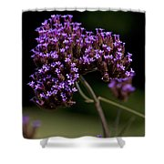 Small Purple Flowers On A Verbena Plant Shower Curtain