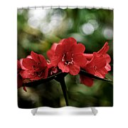 Small Red Flowers Shower Curtain