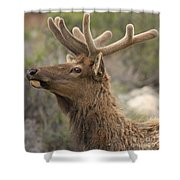 Small Roof Rack Shower Curtain