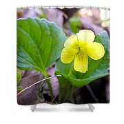 Small Yellow Violet Shower Curtain