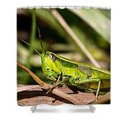 Smaragd-green Grasshopper Shower Curtain