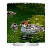 Smew With Ducklings Shower Curtain