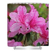 Smiling Azalea  Shower Curtain