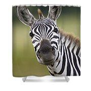Smiling Burchells Zebra Shower Curtain
