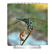 Smiling Dragon Fly Shower Curtain