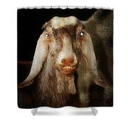 Smiling Egyptian Goat I Shower Curtain