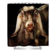 Smiling Egyptian Goat II Shower Curtain