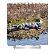 Smiling Gator Shower Curtain