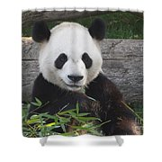 Smiling Giant Panda Shower Curtain