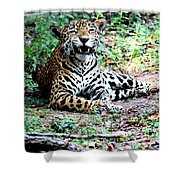 Smiling Jaguar Shower Curtain