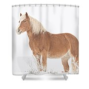 Smiling Palomino In The Snow Shower Curtain