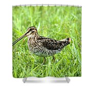 Smiling Snipe Shower Curtain