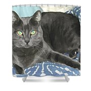 Smokey On A Blue Blanket Shower Curtain
