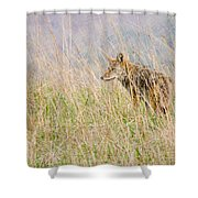 Smoky Mountains Coyote Shower Curtain