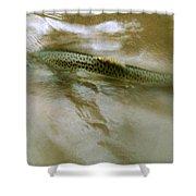 Smolt Swim Shower Curtain