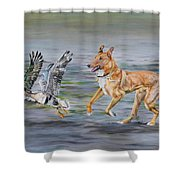 Smooth Collie Trying To Herd Geese Shower Curtain