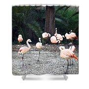 Smudgestick Flamingos Shower Curtain