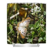 Snack For A White Peacock Butterfly Shower Curtain