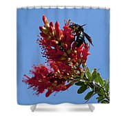 Snack Time Shower Curtain