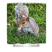 Snack Time For Squirrels Shower Curtain