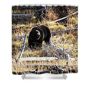 Snacking Bruin Shower Curtain