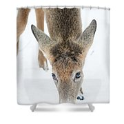 Snacking Deer Shower Curtain