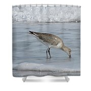 Snacking Sandpiper Shower Curtain