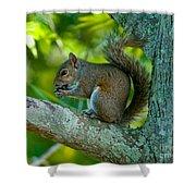 Snacking Squirrel Shower Curtain