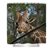 Snacks Shower Curtain