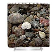 Snail Among The Rocks Shower Curtain