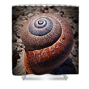 Snail Beauty Shower Curtain