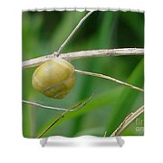 Snail Shower Curtain