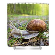 Snail Creeping Over A Forest Path Shower Curtain