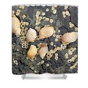 Snail Family Vacation Shower Curtain