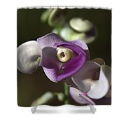 Snail Flower In The Spot Light Shower Curtain