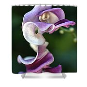 Snail Flower Shower Curtain