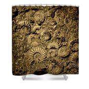 Snail Fossil Shower Curtain