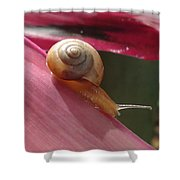 Snail In Motion Shower Curtain