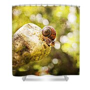 Snail Of A Time Shower Curtain