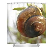 Snail Watercolor - Digital Painting Effect Shower Curtain