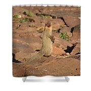 Mongoose Or Snake Eater Shower Curtain