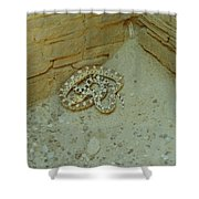 Snake In Ruins Shower Curtain