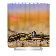Snake Shower Curtain